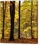 Dark Trunks Bright Leaves Canvas Print
