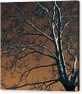 Dark Woods II Canvas Print