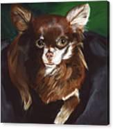 Darla Chihuahua  Canvas Print