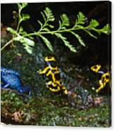 Dart Frogs On The Move Canvas Print