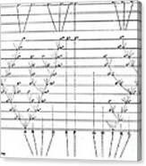 Darwins Scheme For Evolution Of Species Canvas Print
