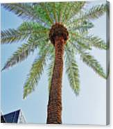 Date Palm In The City Canvas Print