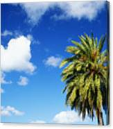 Date Palm Treetop Canvas Print
