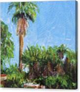 David Rd Palm Canvas Print