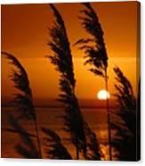 Dawn Grasses Canvas Print