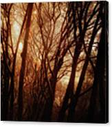 Dawn In The Trees Canvas Print