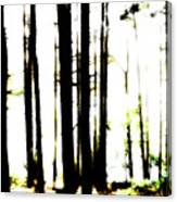 Dawn in the woods Canvas Print