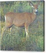 Dawn Names The Deer Canvas Print