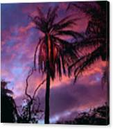 Dawn Palm 03 Canvas Print