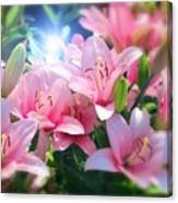 Day Light Lilies Canvas Print