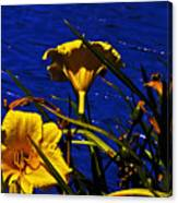 Day Lilies By The Water Canvas Print