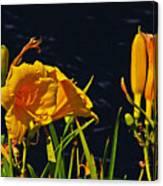 Day Lilies, Dark, Background Canvas Print