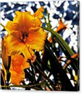 Day Lilies In  Space Canvas Print