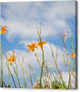Day Lilies Look To The Sky Canvas Print