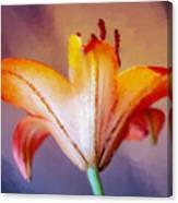 Day Lily Back Canvas Print