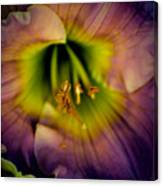 Day Lily In Purple Canvas Print
