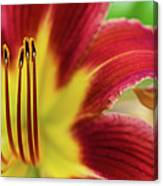 Day Lily Macro Canvas Print