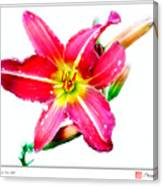Day Lily No 2 Canvas Print