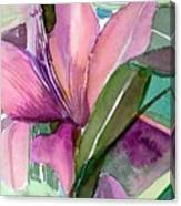 Day Lily Pink Canvas Print