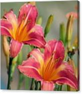 Day Lily Twins Canvas Print