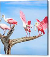 Day Of The Spoonbill  Canvas Print