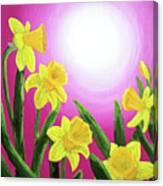 Daybreak Daffodils Canvas Print