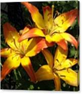 Daylilies Dressed In Their Best Canvas Print