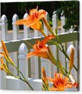 Daylilies On Picket Fence Canvas Print