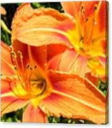 Daylillies In Bloom Canvas Print