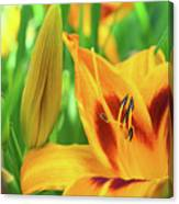 Daylily Bud And Bloom Canvas Print