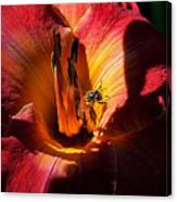 Daylily Collection # 19 Canvas Print