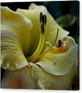 Daylily Collection # 5 Canvas Print