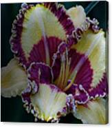 Daylily Collection #9 Canvas Print