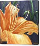 Daylily Canvas Print