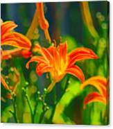 Daylily Trio Canvas Print