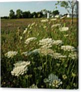 Days Of Queen Annes Lace Canvas Print