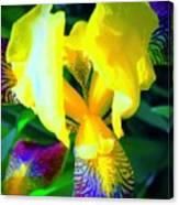 Dazzle In The Garden Sun Canvas Print