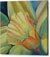 Dazzling Daffodil Canvas Print