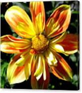 Dazzling Dahlia Photograph Canvas Print