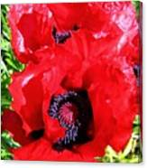 Dazzling Red Poppies Canvas Print