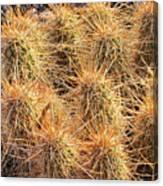 Dbg Cactus II Canvas Print