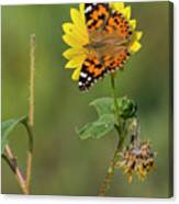 Ddp Djd Painted Lady On Sunflower 2690 Canvas Print