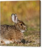 Ddp Djd Snowshoe Hare 98 Canvas Print