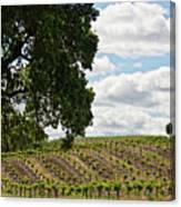De Vines Canvas Print