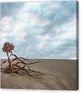 Dead Bush In Sea Sand St Lucia Canvas Print