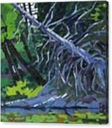 Dead Cedar Canvas Print