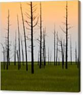 Dead Cedars Canvas Print