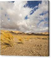 Dead Dry Grass In The Desert Canvas Print