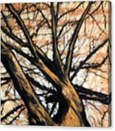 Dead Elm Canvas Print