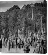 Dead Lakes Cypress Stumps Bw  Canvas Print